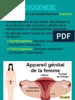 Embryologie.Ovogénèse