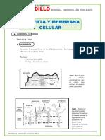 05 DE MAYO Cubierta-y-Membrana-Celular-para-SEGUNDO-de-Secundaria (1)