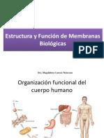 Membrana plasmatica 2020 _1.pdf