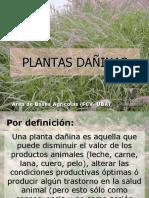 Plantas Dañinas final