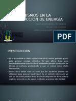 Organismos en la producción de energía BIOTECNOLOGÍA[235] (1)