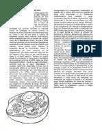 UN TOUR POR LA CELULA1.pdf