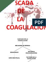 CASCADA COA