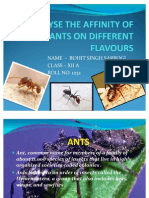 Which Flavour Does Ants Are Most Attracted To