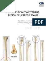 ANTEBRAZO_MANO_FOSA_CUBITAL_Y_TUNEL_DEL_CARPO