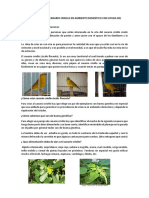 tutorial canario criollo (1)