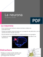 5 neurona final II