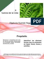 presentación OLGALUCIA - MORFOLOGÍA