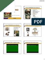 AULA 19 - Reino Fungi.pdf