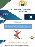 ANATOMIA Y ESTRUCTURA MUSCULAR (2).pptx