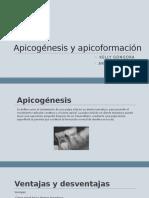 Apicogénesis y apicoformación expo