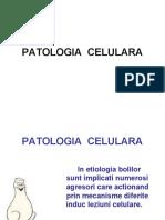 PATOLOGIA  CELULARA-gata