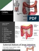 Anal pathology