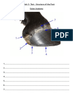 hoof structure ws
