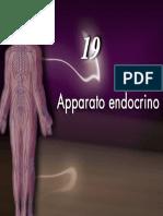 Apparato endocrino1_5Martini