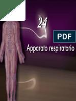 Apparato respiratorio2_2Martini