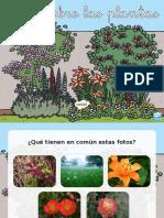 es-t-sc-272-todo-sobre-las-plantas-presentacion