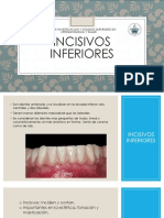 INCISIVOS INERIORES ANATOMIA.pdf