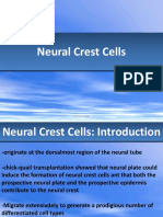 Lect_10_neural_crest_cells_and_axonal_specificity.pdf