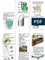Struktur Jaringan Tumbuhan(1)