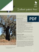 ScatteredPaddockTrees[1]