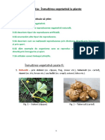 lectia_inmultirea_vegetativa_la_plante_vii_24.04.2020