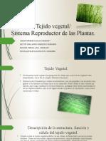 Tejido vegetal y sistema