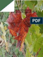 Manual-de-calidad-para-productores-de-uva-para-vino.pdf