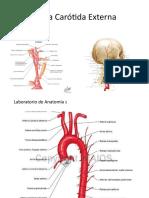 Arteria Carótida Externa.pptx
