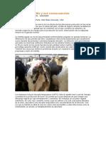 Vacas con metritis y sus consecuencias.doc