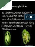 Ranunculaceae_Brassicaceae_Malvaceae_