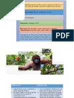 PARQUE NATURAL TINIGUA.pdf