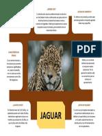 FICHA INFORMATIVA SOBRE EL jaguar.docx