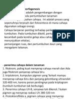 Fotomorfogenesis-WPS Office.pptx