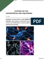 Artic - Tipos de neuronas con sus características más importantes