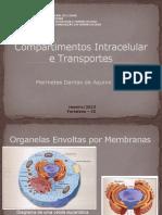 Compartimentos Intracelular e Transporte
