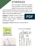 Curs I - 2019-2020.pdf