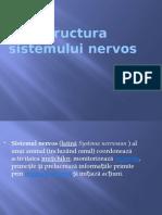 structura_sistemului_nervos (1)