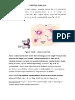 Anexele produsului de conceptie 2