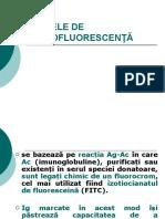 Lp6_TESTE DE IMUNOFLUORESCENTA