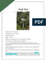 Teak Tree -Rishika jain
