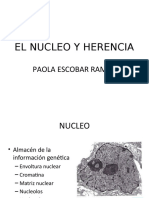 NUCLEO_Y_HERENCIA2_2_