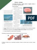 exerc celular (2).pdf