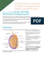 EXPLORACIÓN DE TRACTO GENITAL MASCULINO HEMORRO.docx