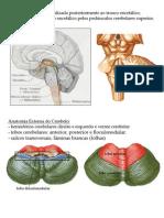 Neuroanato Facul TALITA