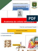 ANATOMIA DA COLUNA VERTEBRAL II 2019 (1)