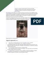 Historia Bulldog francés