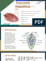 Fasciola Hepática (presentación infectologia) (2)