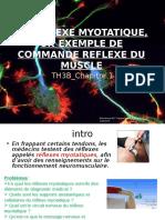 Theme 3b Ch1 Le Reflexe Myotatique Un Exemple de Commande 2