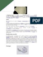 Diatomita